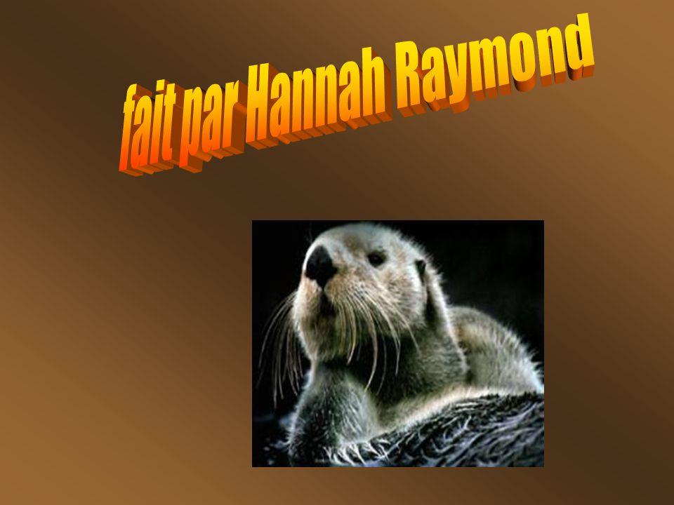 fait par Hannah Raymond