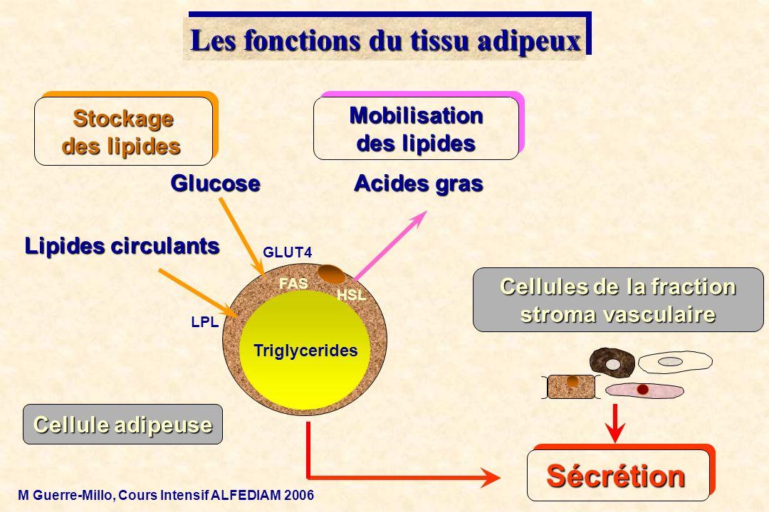 Les fonctions du tissu adipeux