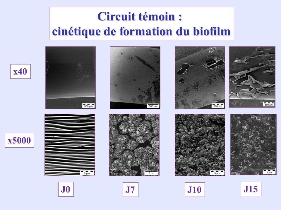 cinétique de formation du biofilm