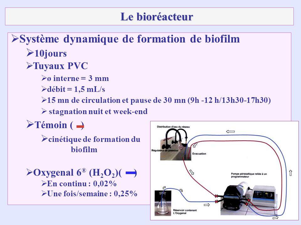 Système dynamique de formation de biofilm 10jours