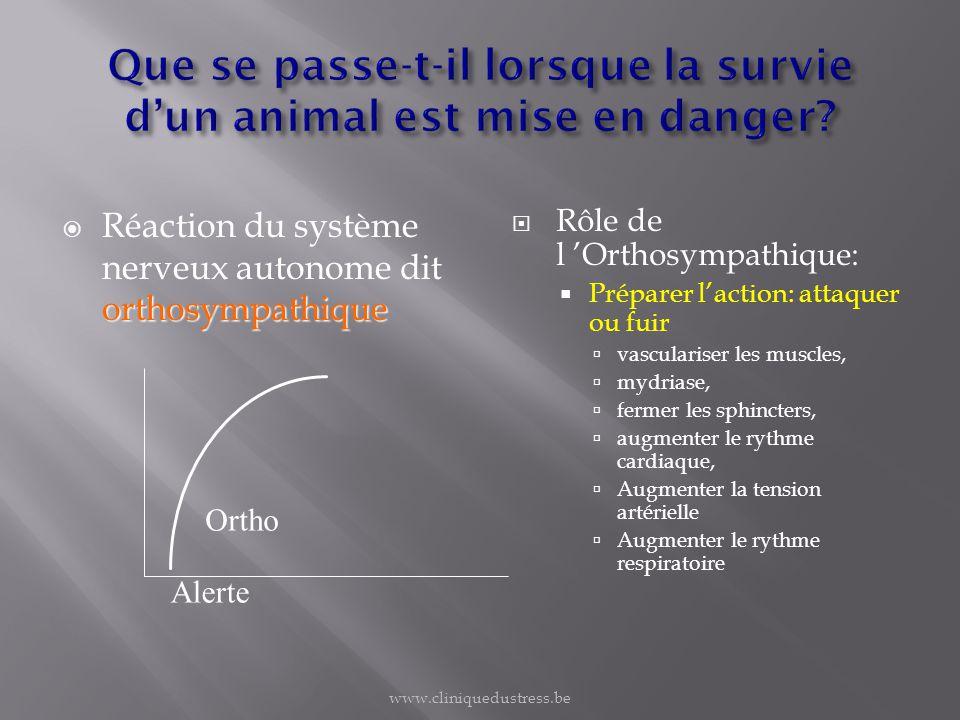 Que se passe-t-il lorsque la survie d'un animal est mise en danger