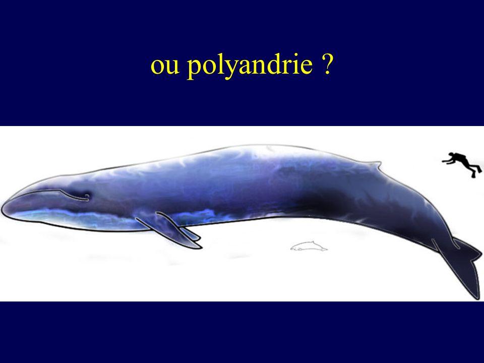 ou polyandrie