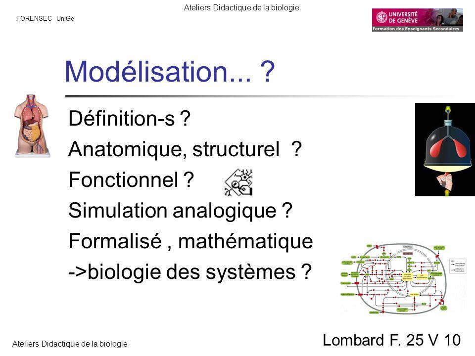 Modélisation... Définition-s Anatomique, structurel