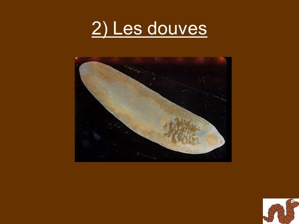 2) Les douves