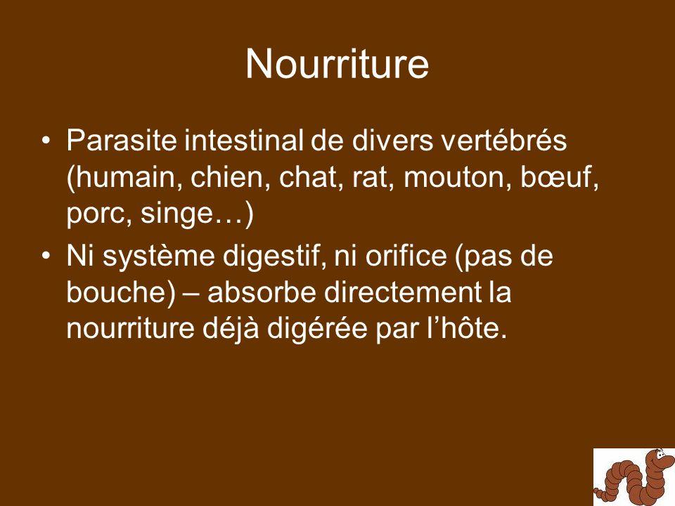 Nourriture Parasite intestinal de divers vertébrés (humain, chien, chat, rat, mouton, bœuf, porc, singe…)
