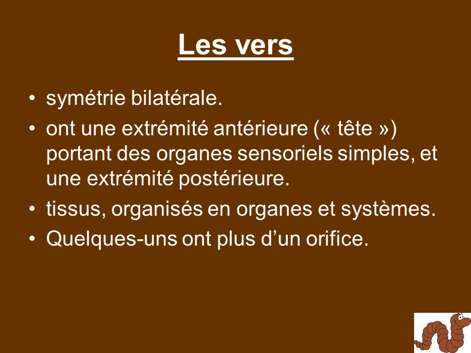 Les vers symétrie bilatérale.