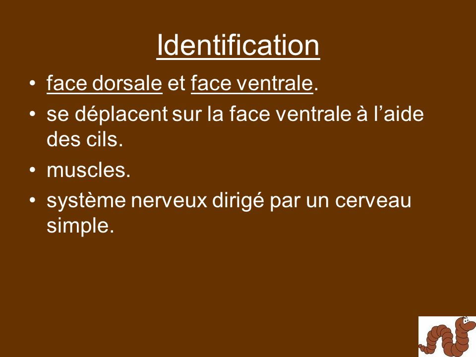 Identification face dorsale et face ventrale.