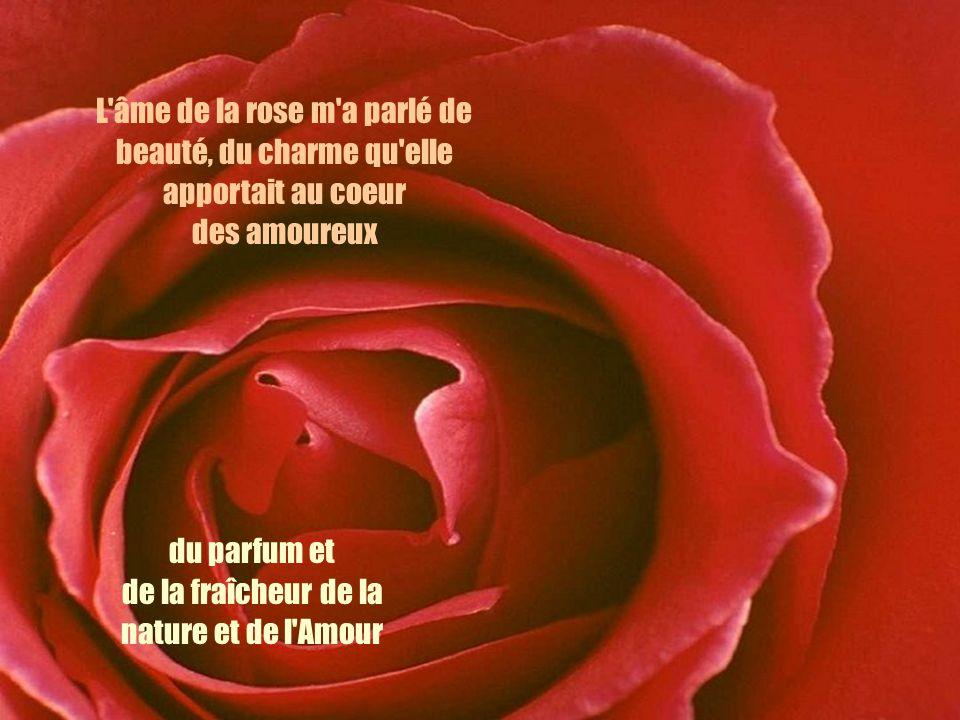 L âme de la rose m a parlé de beauté, du charme qu elle