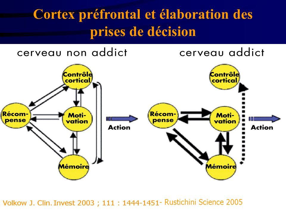 Cortex préfrontal et élaboration des prises de décision