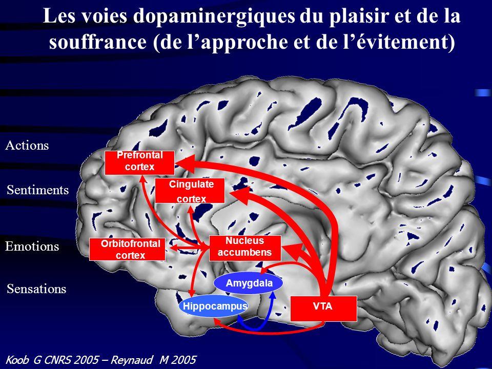 Les voies dopaminergiques du plaisir et de la souffrance (de l'approche et de l'évitement)