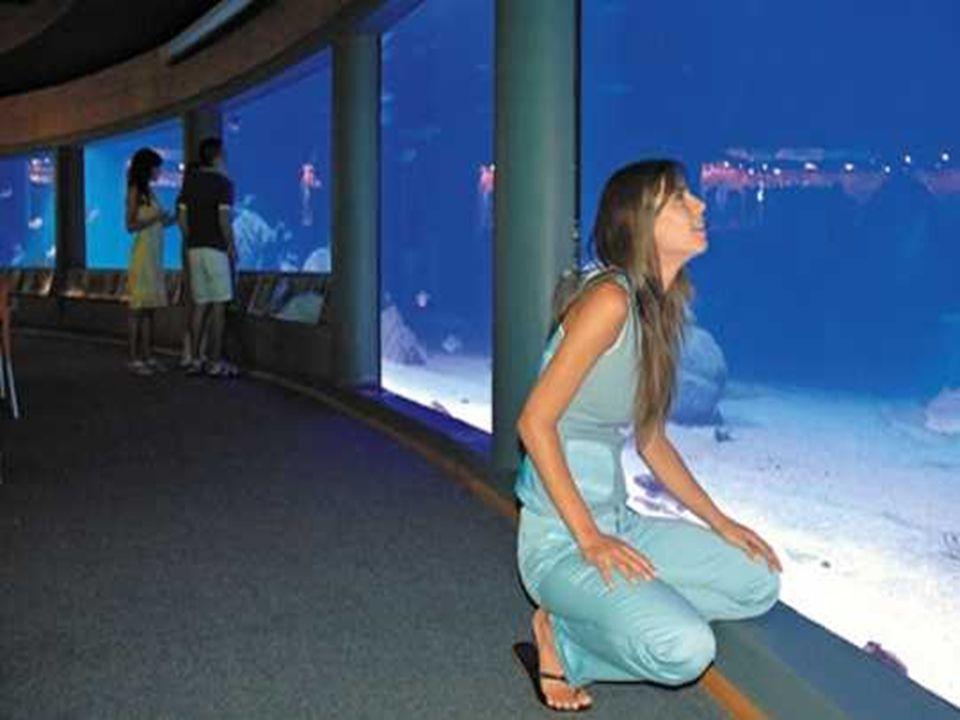 Le site de San Alfonso del Mar comporte le plus aquarium du pays