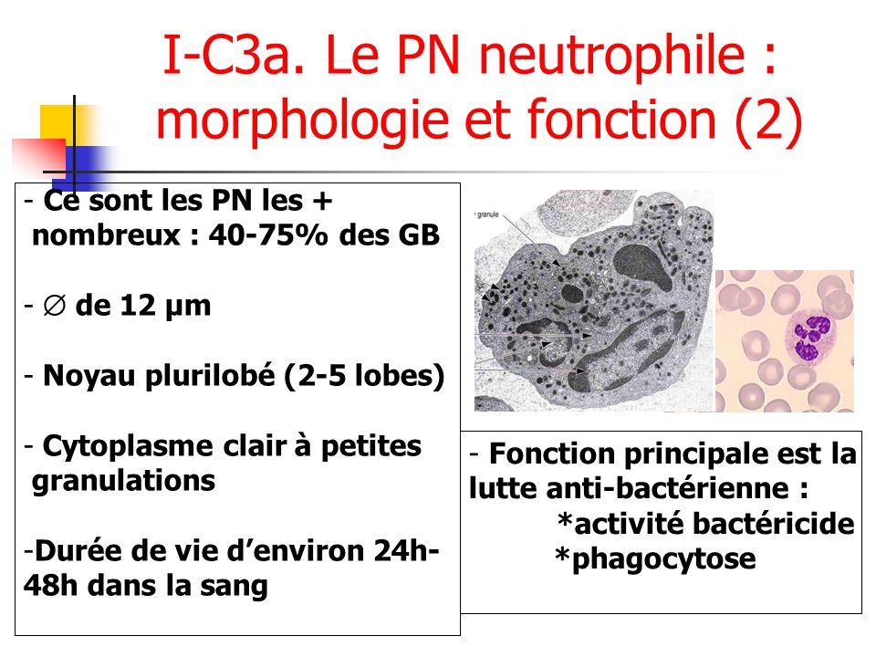 I-C3a. Le PN neutrophile : morphologie et fonction (2)