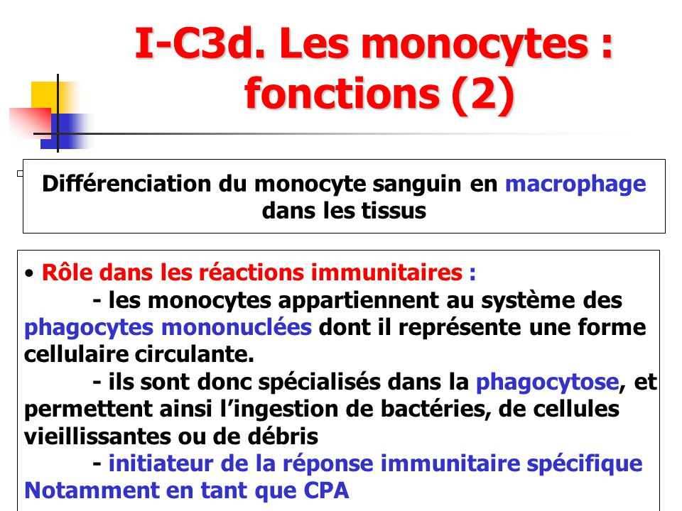 I-C3d. Les monocytes : fonctions (2)