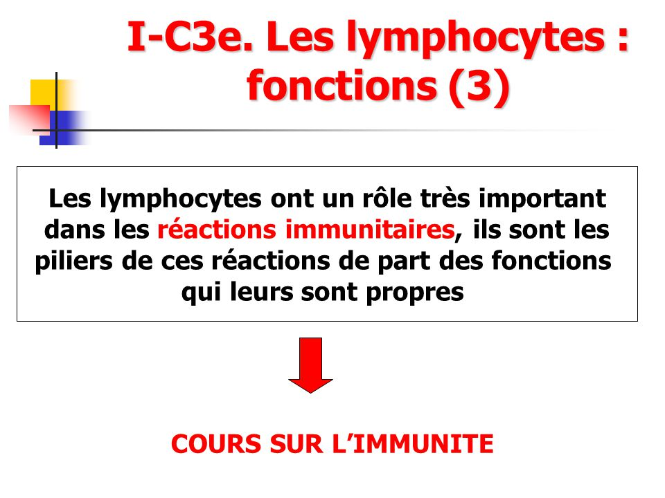 I-C3e. Les lymphocytes : fonctions (3)