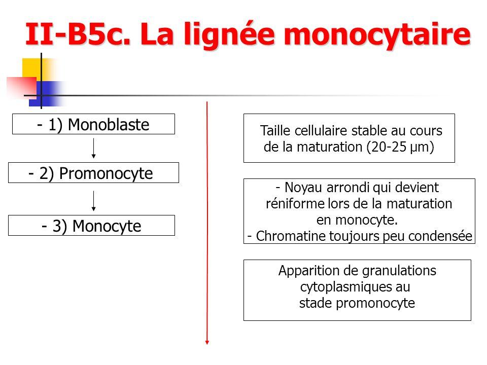 II-B5c. La lignée monocytaire