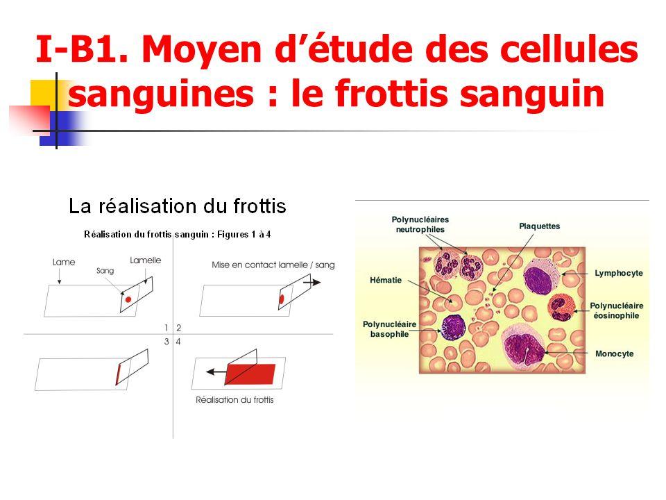 I-B1. Moyen d'étude des cellules sanguines : le frottis sanguin