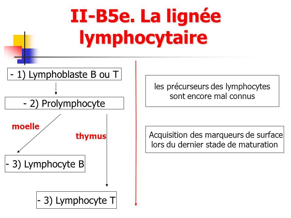 II-B5e. La lignée lymphocytaire