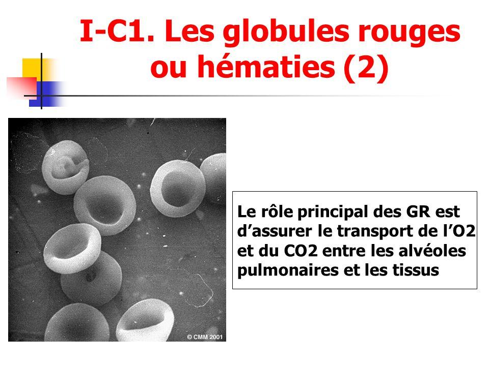 I-C1. Les globules rouges ou hématies (2)