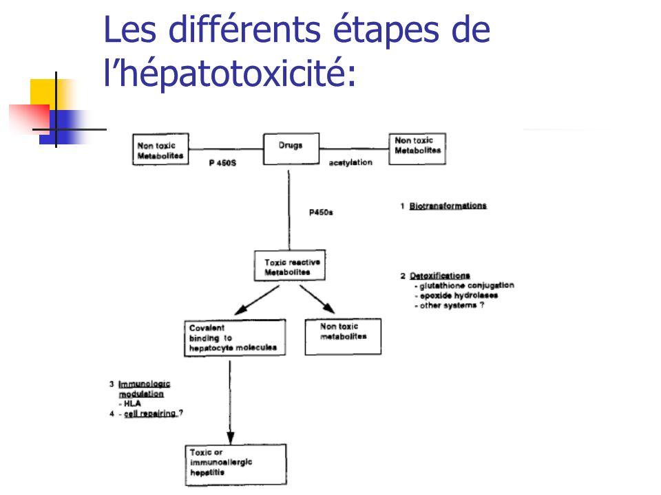 Les différents étapes de l'hépatotoxicité: