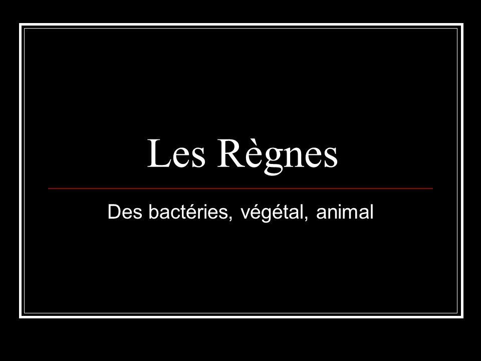 Des bactéries, végétal, animal