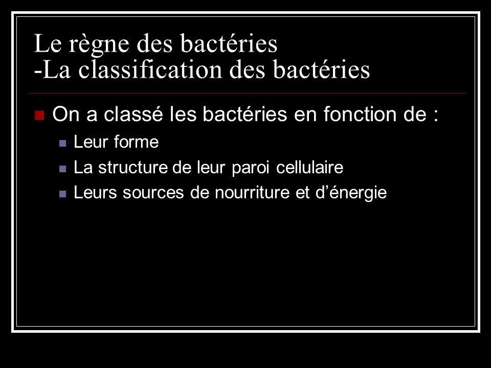 Le règne des bactéries -La classification des bactéries