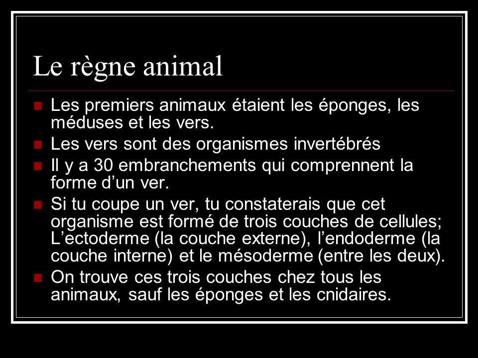 Le règne animal Les premiers animaux étaient les éponges, les méduses et les vers. Les vers sont des organismes invertébrés.