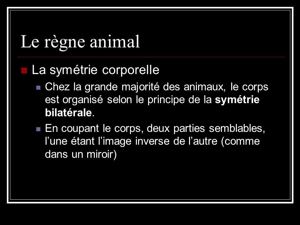 Le règne animal La symétrie corporelle