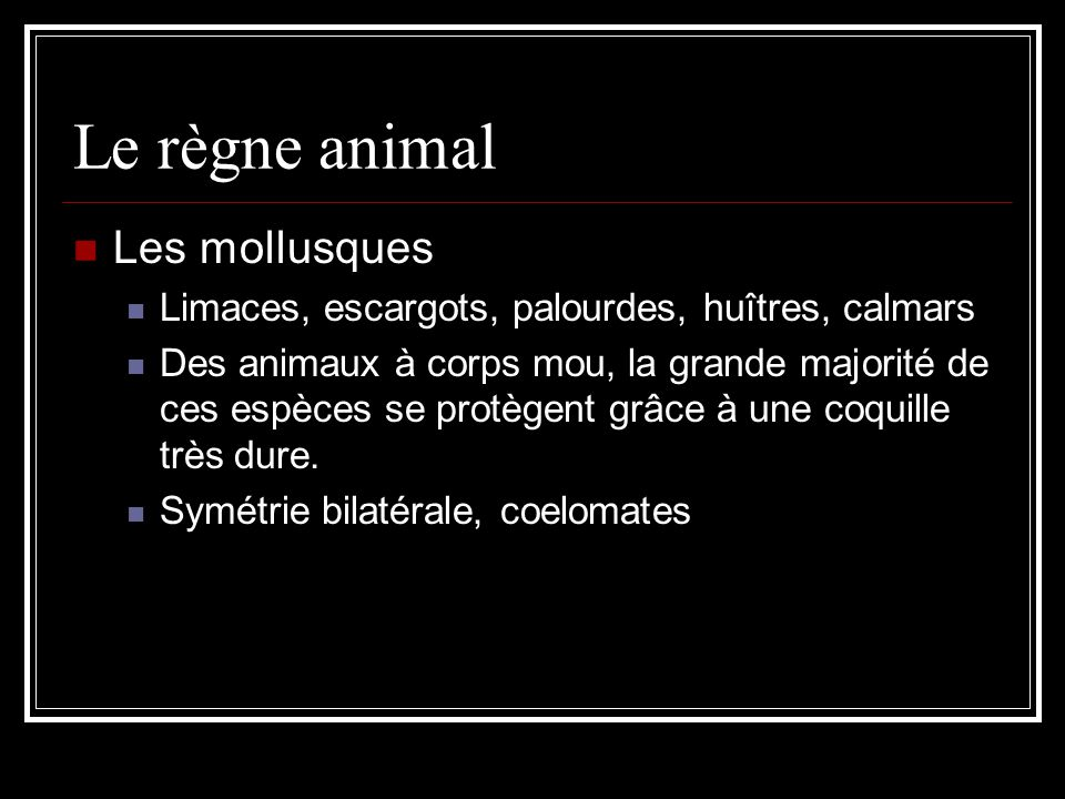 Le règne animal Les mollusques