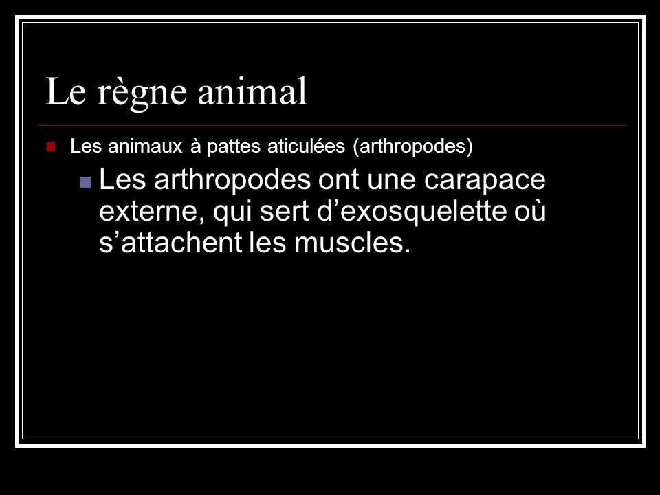 Le règne animal Les animaux à pattes aticulées (arthropodes)
