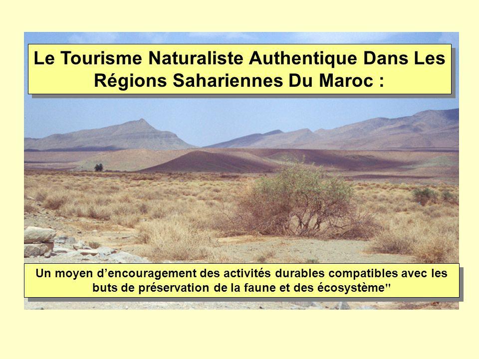 Le Tourisme Naturaliste Authentique Dans Les Régions Sahariennes Du Maroc :