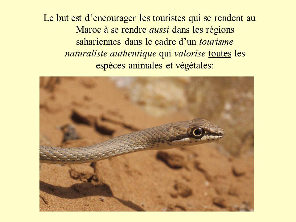Le but est d'encourager les touristes qui se rendent au Maroc à se rendre aussi dans les régions sahariennes dans le cadre d'un tourisme naturaliste authentique qui valorise toutes les espèces animales et végétales: