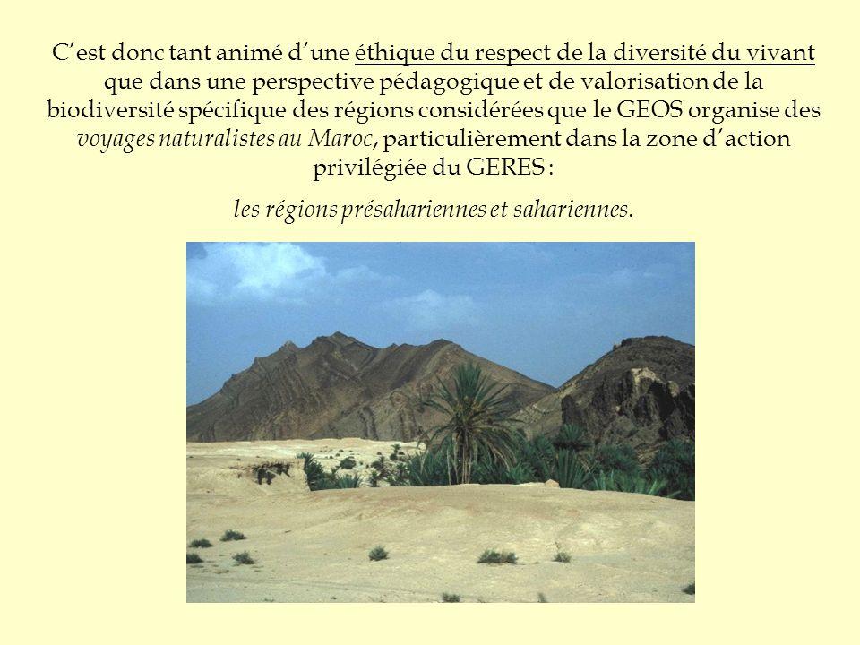 C'est donc tant animé d'une éthique du respect de la diversité du vivant que dans une perspective pédagogique et de valorisation de la biodiversité spécifique des régions considérées que le GEOS organise des voyages naturalistes au Maroc, particulièrement dans la zone d'action privilégiée du GERES : les régions présahariennes et sahariennes.