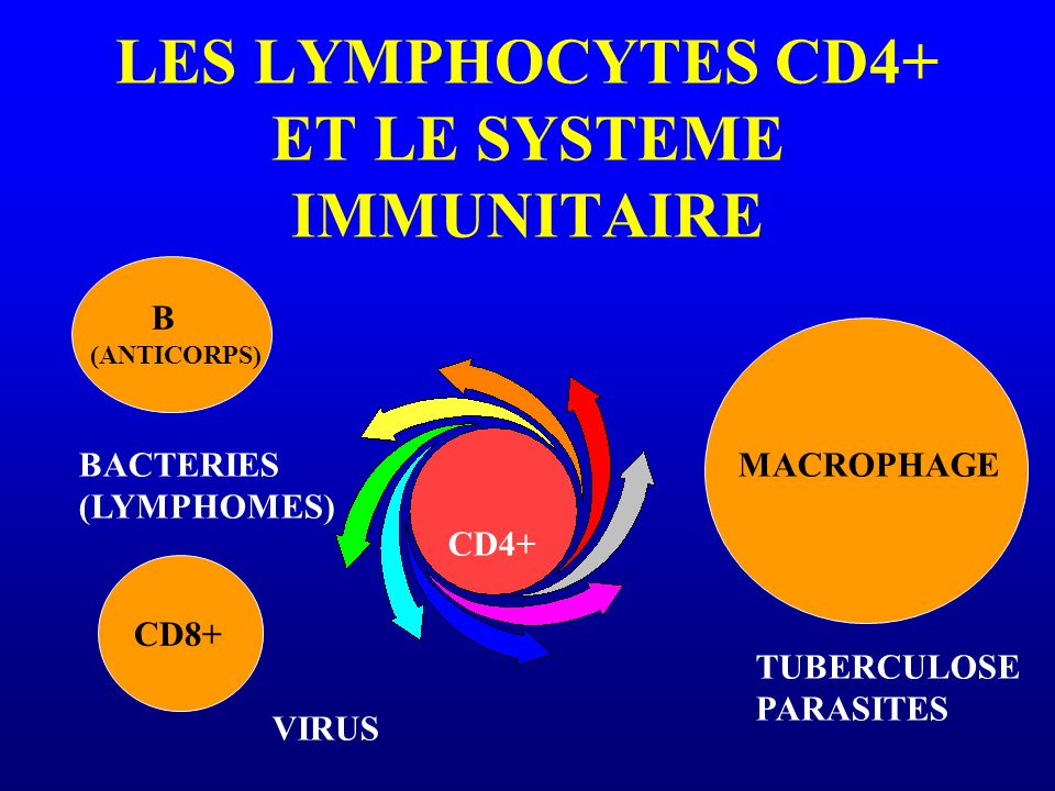 LES LYMPHOCYTES CD4+ ET LE SYSTEME IMMUNITAIRE