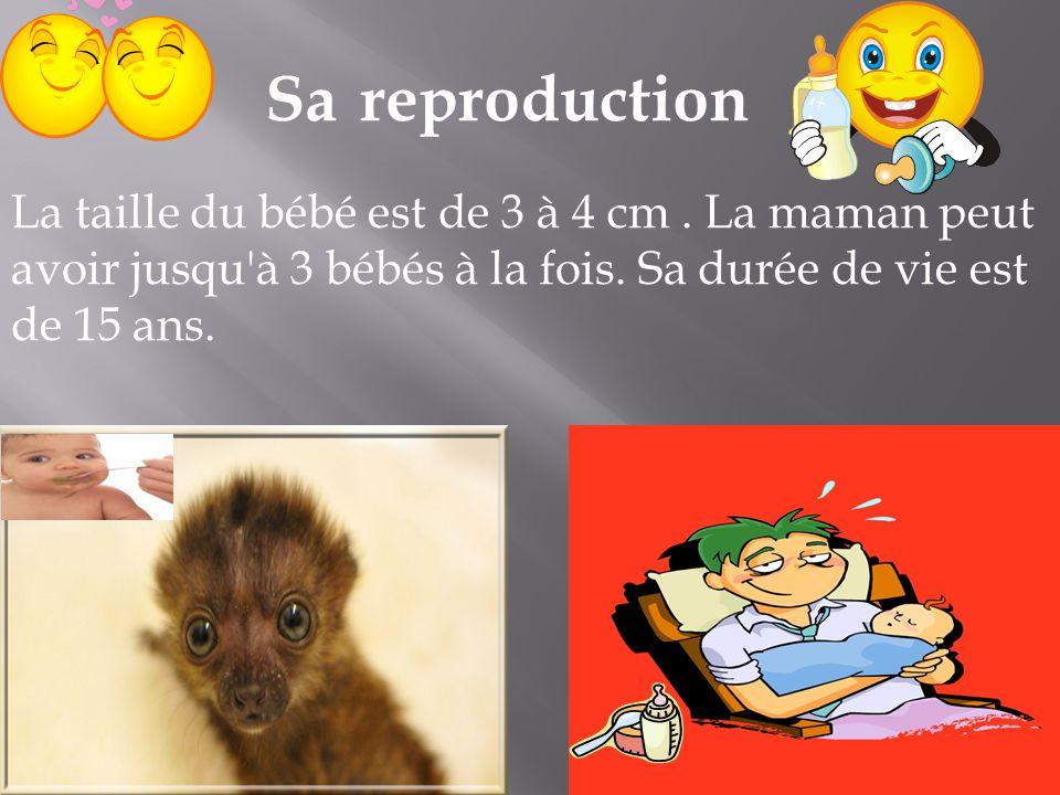 Sa reproduction La taille du bébé est de 3 à 4 cm .