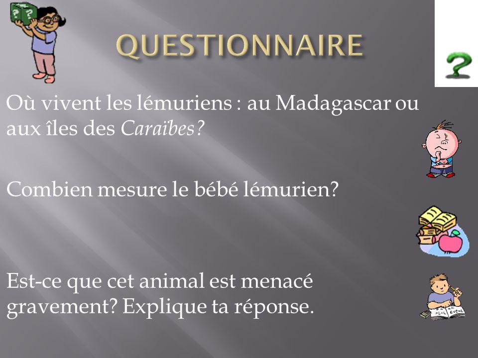 QUESTIONNAIRE Où vivent les lémuriens : au Madagascar ou aux îles des Caraïbes Combien mesure le bébé lémurien