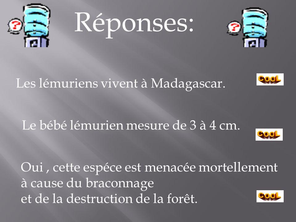 Réponses: Les lémuriens vivent à Madagascar.