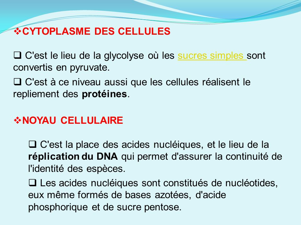 CYTOPLASME DES CELLULES
