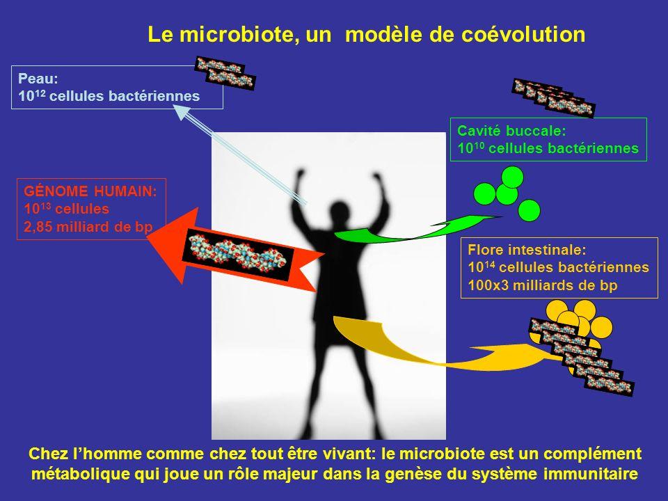 Le microbiote, un modèle de coévolution