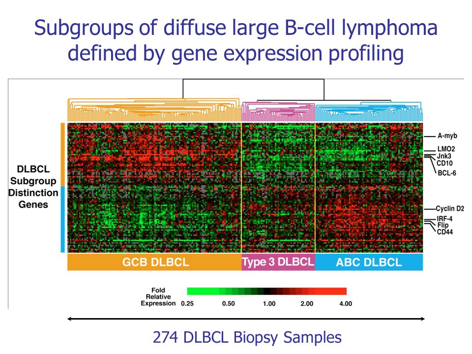 Subgroups of diffuse large B-cell lymphoma