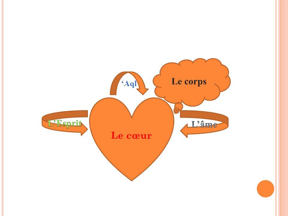 Le corps 'Aql Le cœur L'Esprit L'âme