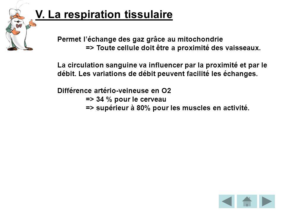 V. La respiration tissulaire