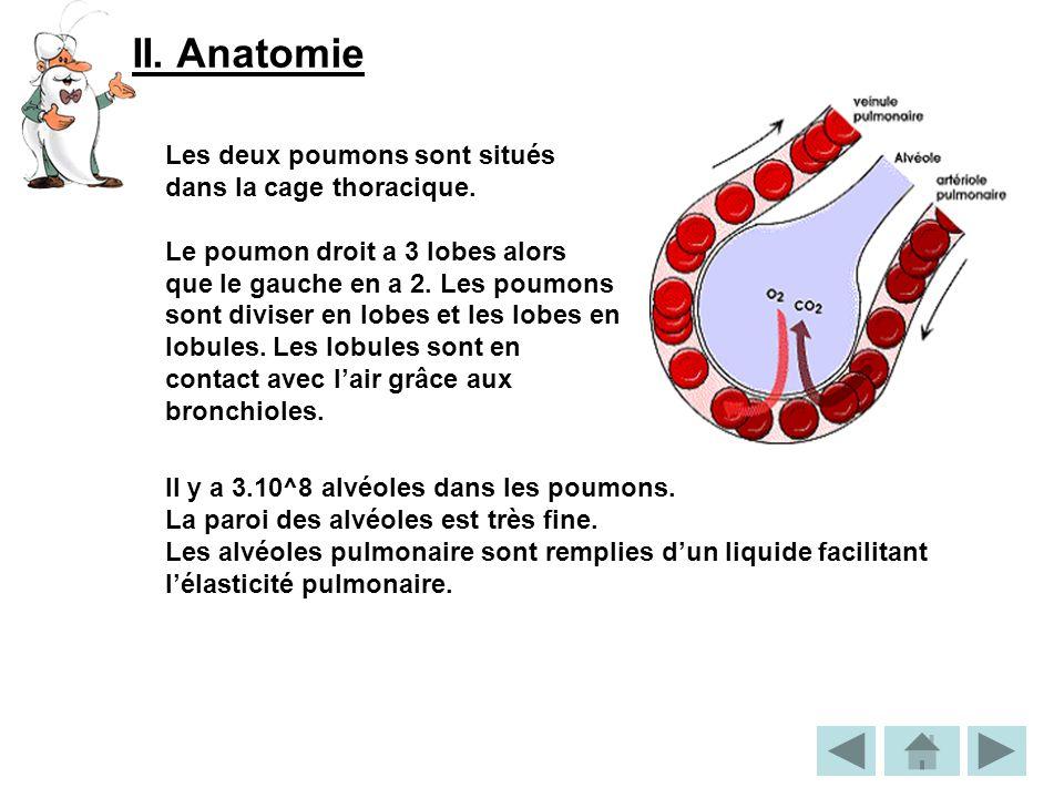 II. Anatomie Les deux poumons sont situés dans la cage thoracique.