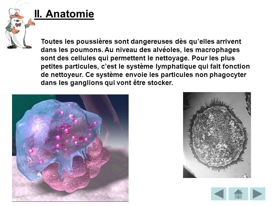 II. Anatomie