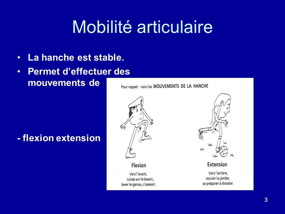 Mobilité articulaire La hanche est stable.