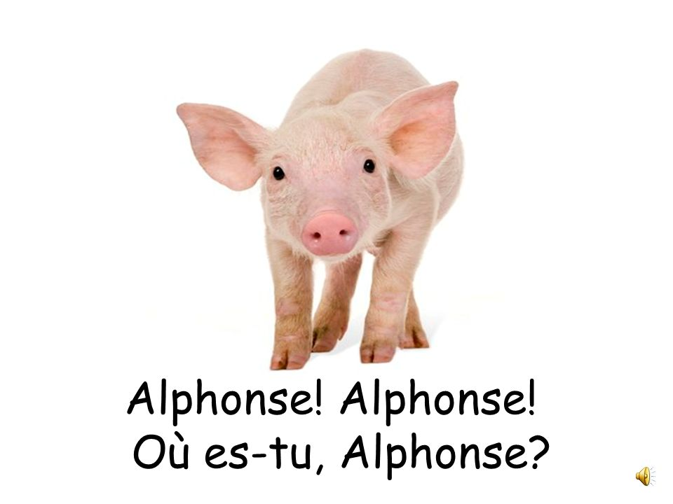 Alphonse! Alphonse! Où es-tu, Alphonse