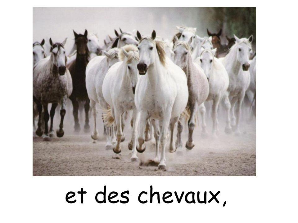 et des chevaux,