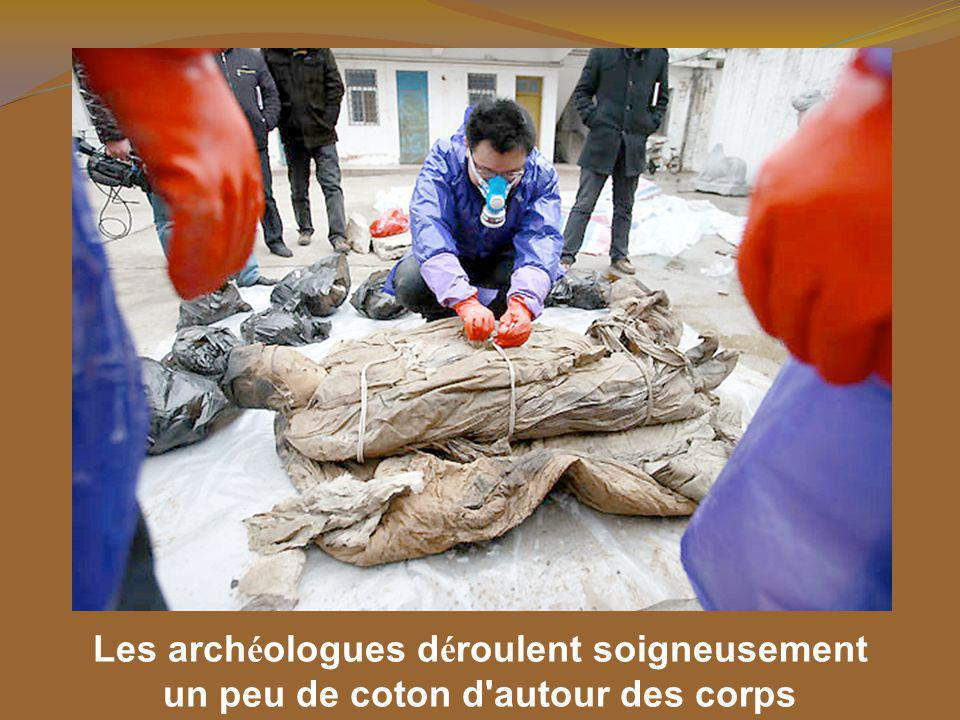 Les archéologues déroulent soigneusement