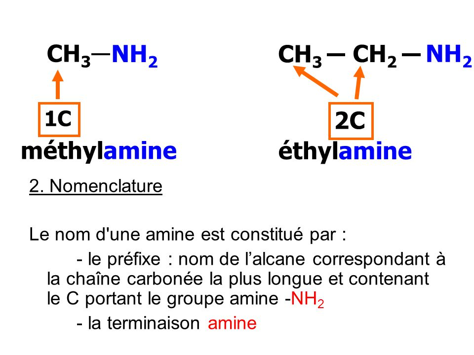 CH3 NH2 CH3 CH2 NH2 2C méthylamine éthylamine 1C 2. Nomenclature