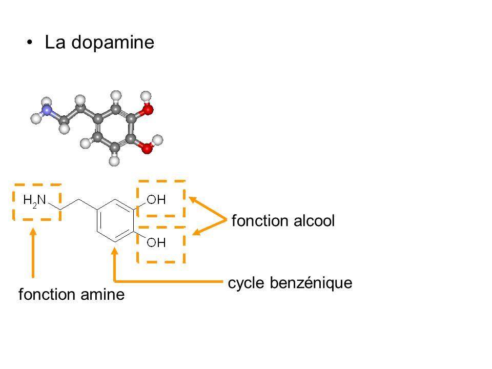 La dopamine fonction alcool cycle benzénique fonction amine