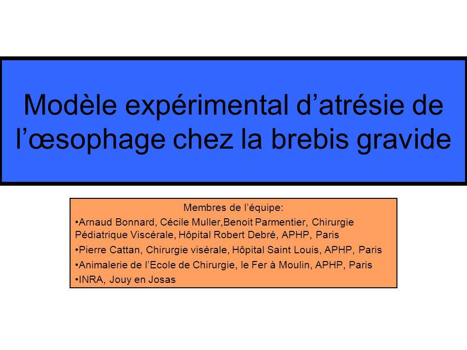 Modèle expérimental d'atrésie de l'œsophage chez la brebis gravide